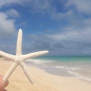 beach starfish photo download 写真 無料 ダウンロード